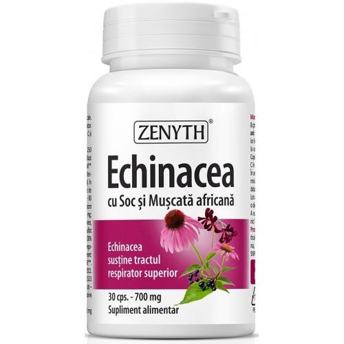 Zenyth Echinacea